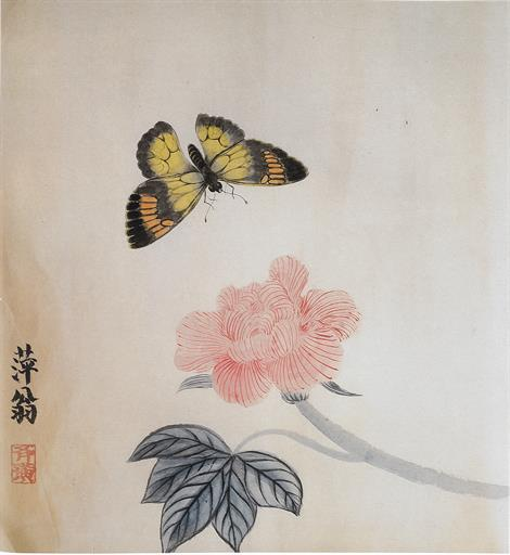 Hibiscus and butterfly 芙蓉蝴蝶
