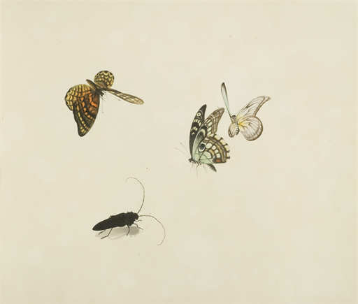 Drawings of flowers and insects (untitled)